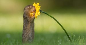 Squirrel-smells-of-a-flower-near-me
