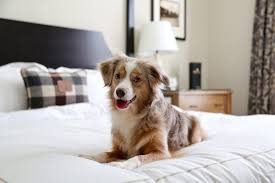 Pets-friend-hotels-cheap-nearest-to-me