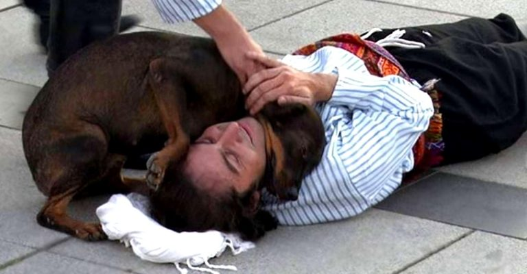 A stray dog interrupts the scene to comfort the actor pretending to be injured