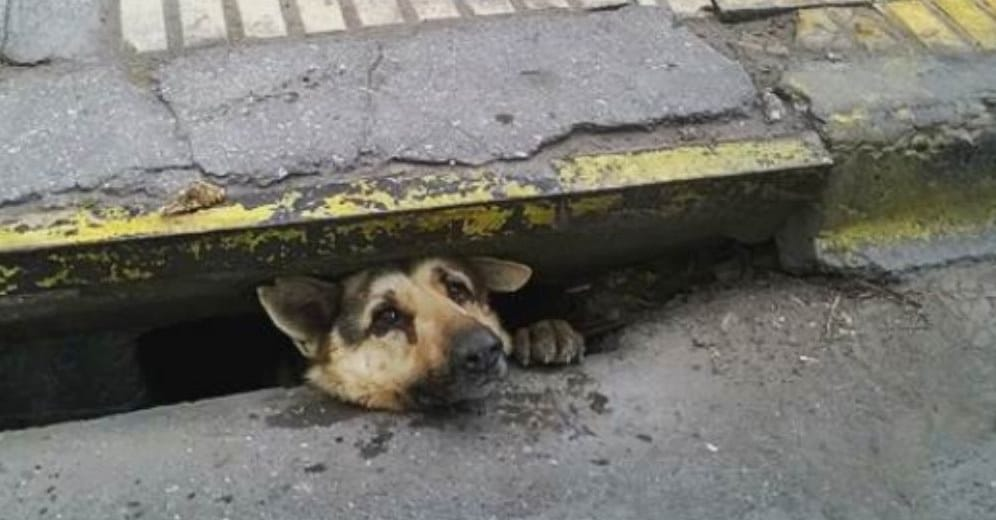 The dog got stuck in a sewer – its perilous rescue lasted 4 days