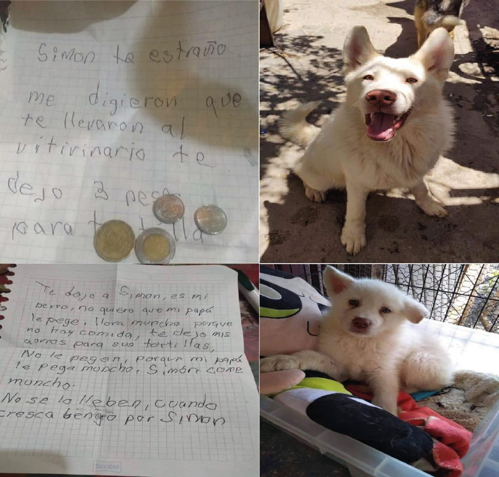 A boy writes a letter to the animal shelter asking to take good care of his old dog
