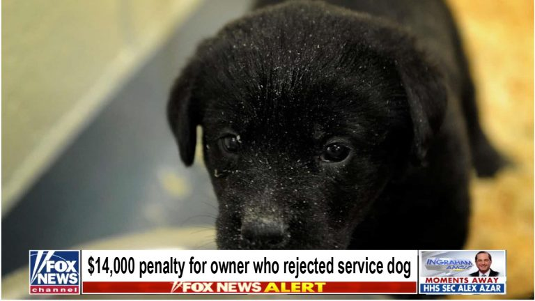 $14,000 penalty for the owner who rejected service dog