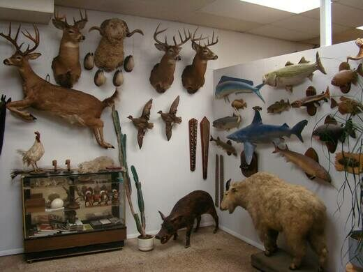 How to find taxidermy near me open now